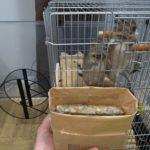 デグーが食べる⁉ 猫草栽培日記 <その1>