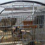 【自作】ペット用天井暖房「暖突」のスタンドを作ってみました